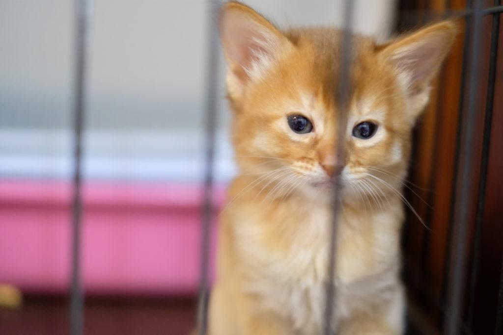小倉の猫カフェ「Un chaton (アンシャトン)」