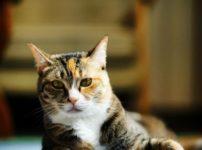 猫と本 Miaw